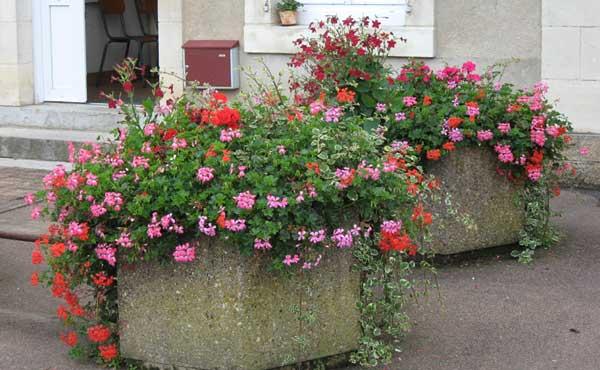 - Fleurs en jardiniere toute l annee ...